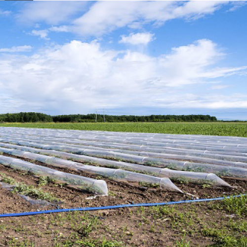 Telas para Uso Agricola