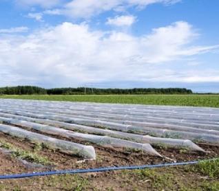 ¿Qué ventajas ofrecen los agrotextiles, como el agribon?